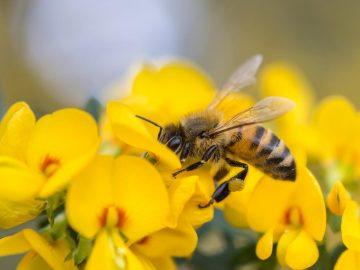 Аллергия на укусы насекомых (комар, мошка, оса, пчела, шершень)