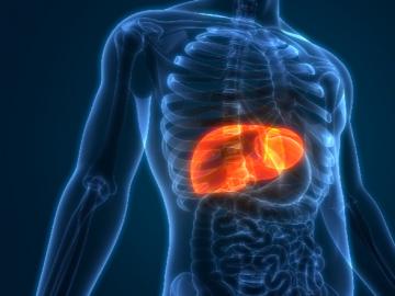 Заболевания печени: гепатиты разной этиологии, цирроз печени. Причины заболеваний печени.
